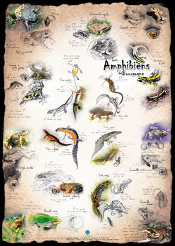 Amphibiens Bourgogne