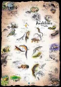 Amphibiens Sarthe