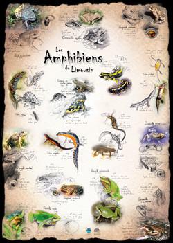 Amphibiens Limousin