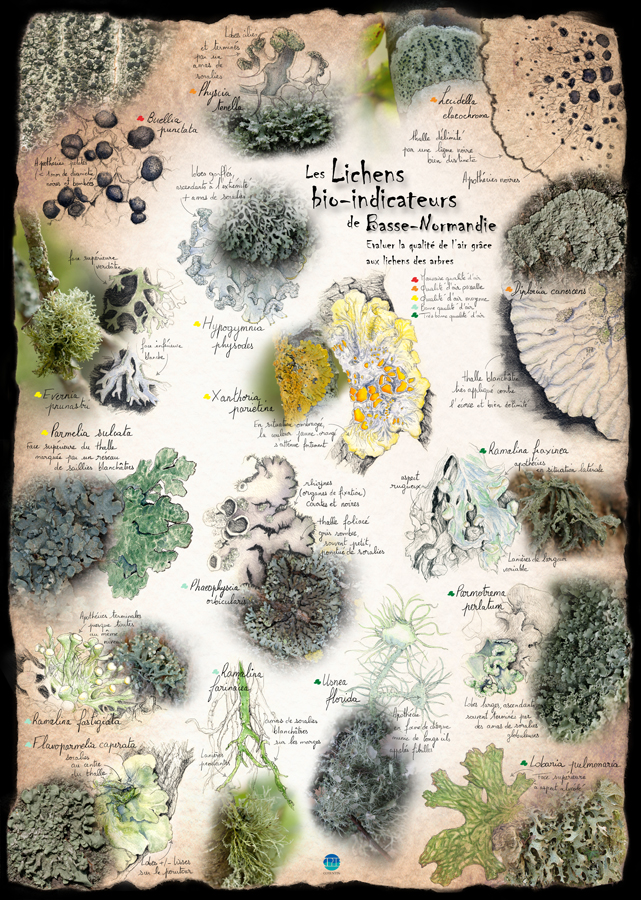 Lichens bio-indicateurs