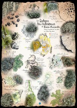 Poster Lichens de Basse-Normandie