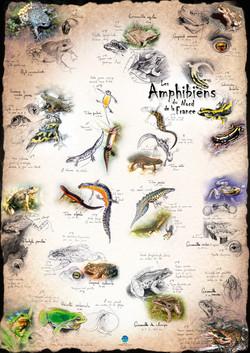 Amphibiens Nord de la France