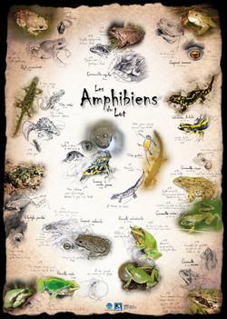 Amphibiens Lot
