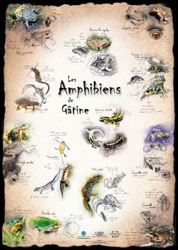 Amphibiens de Gâtine