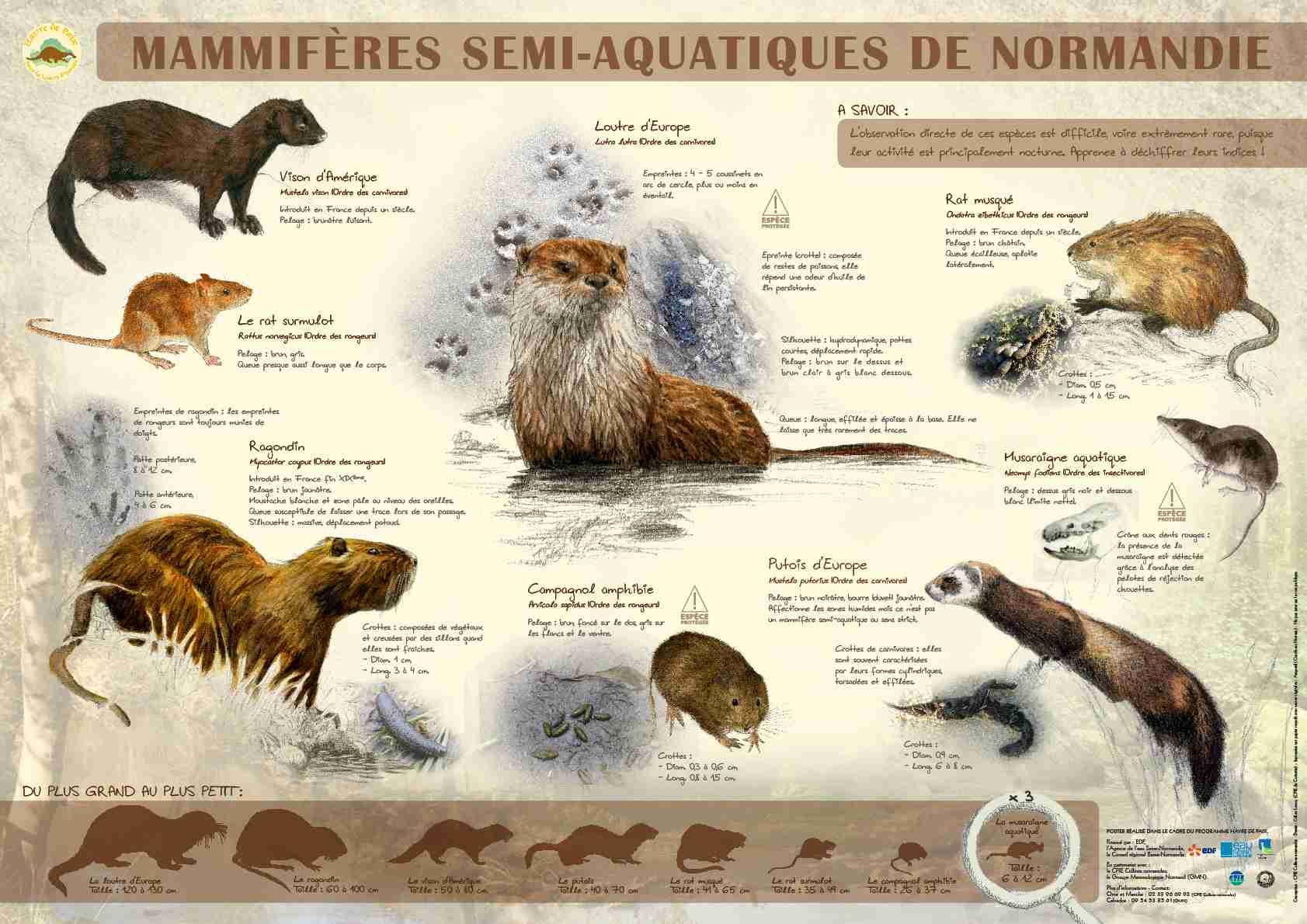 Mammifères semi-aquatiques