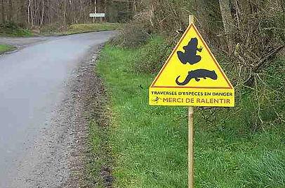 Cartographie coopérative des sites de mortalité routière d'amphibiens en Normandie