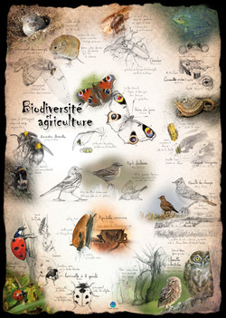 Biodiversité & Agriculture FMaritime