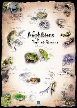 Amphibiens Tarn-et-Garonne