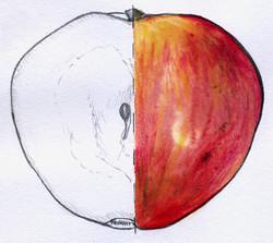 dessin pomme rouget de dole