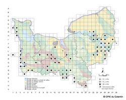 Carte Lézard vert occidental