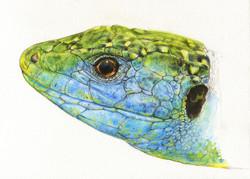 Lézard vert - aquarelle