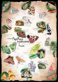 Papillons nocturnes de Picardie