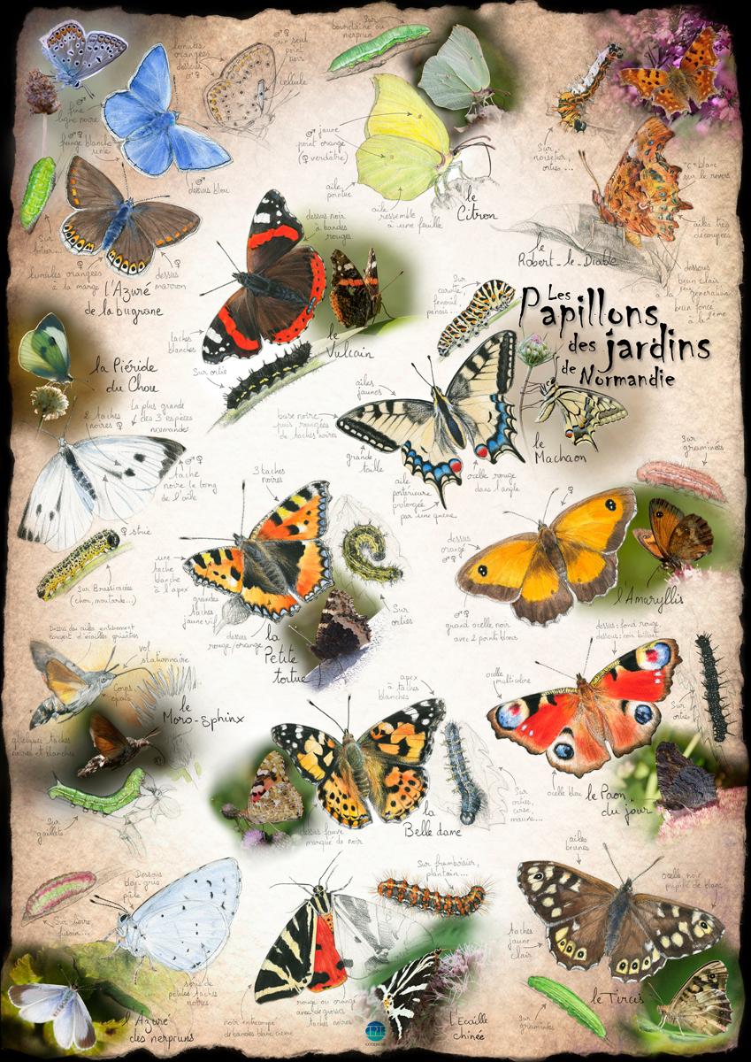 Papillons des jardins de Normandie