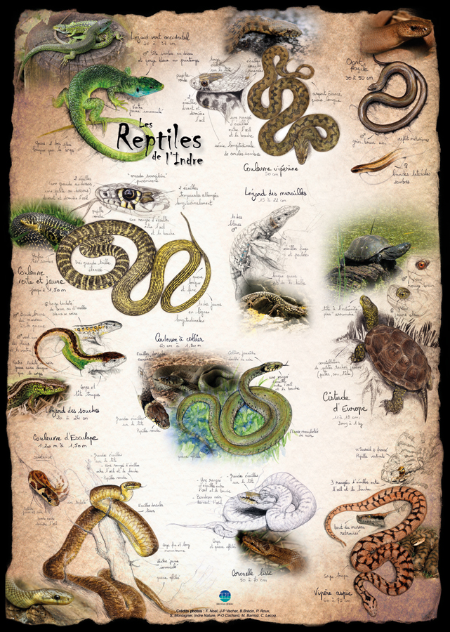 Reptiles Indre