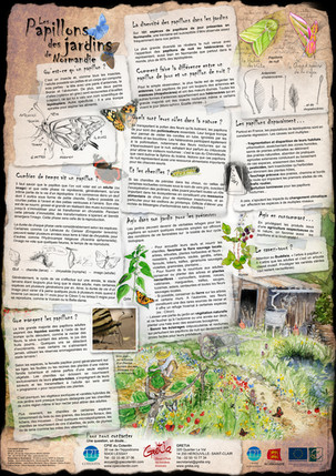Verso papillons des jardins