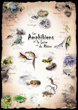 Amphibiens Loire et Rhône