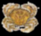aquarelle_crabe_vert_©CLecoq_copie.png