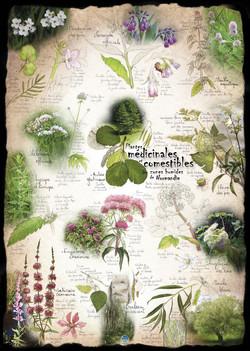 Plantes médicinales & comestibles ZH