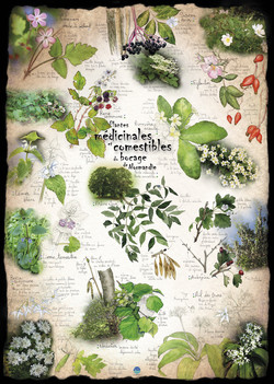 Plantes méd. & comestibles boc