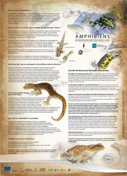 Amphibiens du PNM - verso