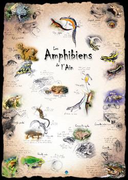 Amphibiens Ain
