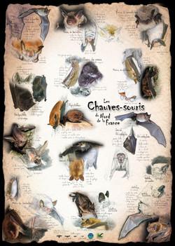 Chauves-souris Nord de la France