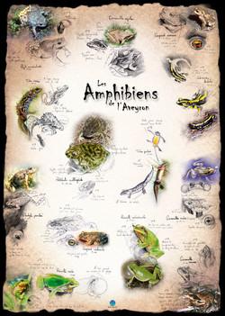 Amphibiens Aveyron