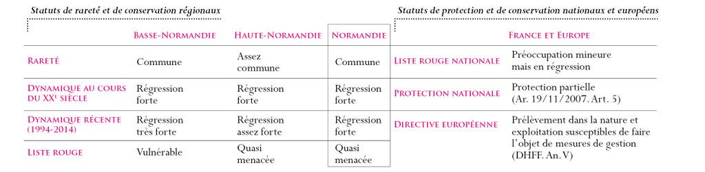 Statuts Grenouille rousse