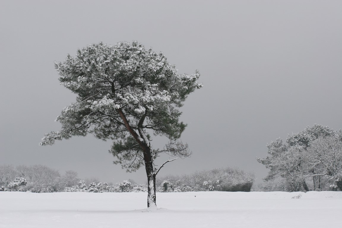 Landes - Lande de Lessay en hiver