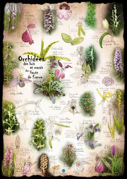 Orchidées Hauts de France