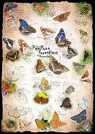 poster-papillons-forestiers-de-Ndie.jpg