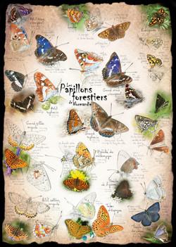 Papillons forestiers de Normandie