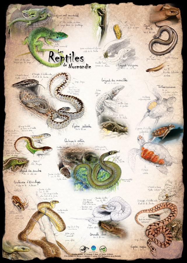 Reptiles de Normandie