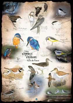 Petits oiseaux rivière Hts de Fr