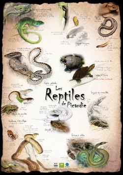 Reptiles de Picardie
