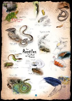 Reptiles Nord de la France