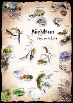 Amphibiens Pays de la Loire