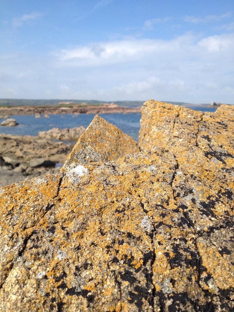 Paysage de Lichens des rochers littoraux
