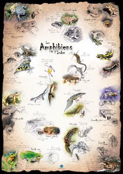 Amphibiens Indre