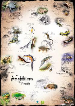 Amphibiens de Picardie