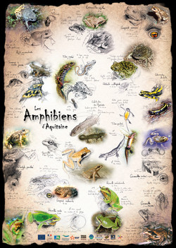 Amphibiens Aquitaine
