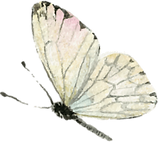 papillons-min.png
