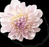 Flower 24-min.png