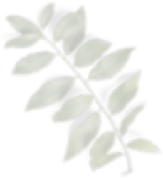Leaves 01 Copy-min.png