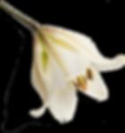 Flower 23-min.png