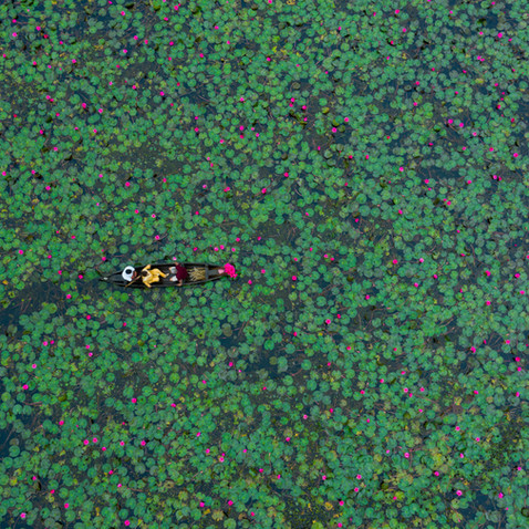 Canoeing through the water lily blossoms.jpg