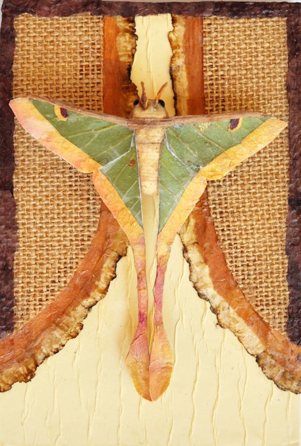 Moth #3
