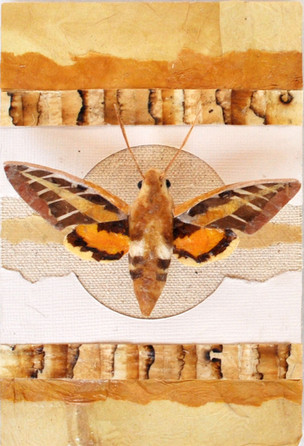Moth #2