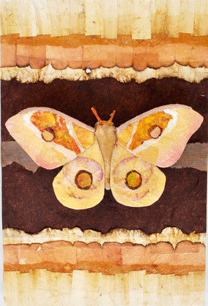 Moth #1