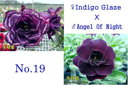 No. 19 (20 seed)